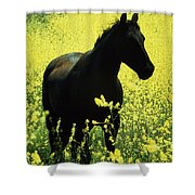County Tipperary, Ireland Horse In A Shower Curtain