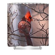 Cover My Back Shower Curtain
