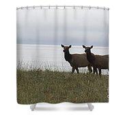 Cow Elk Pair On Beach Shower Curtain