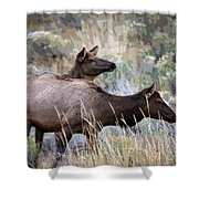 Cow Elk Shower Curtain