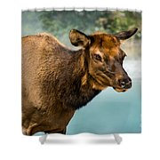 Cow Elkii Shower Curtain