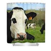 Cow Facing Camera Shower Curtain