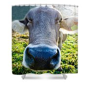 Cow In Backlight Shower Curtain