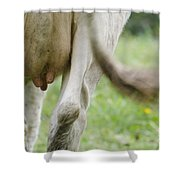 Cow Nips And Tail Shower Curtain