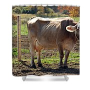 Cow Shadows Shower Curtain