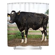 Cow With Johnes Disease Shower Curtain