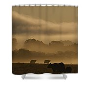 Cows Are Silhouetted In A Field Shower Curtain