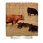 Cows Shower Curtain