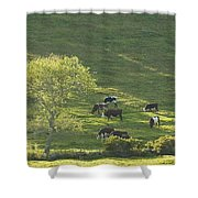 Cows On Hillside Summer In Maine Shower Curtain