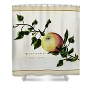 Coxs Apple 1922 Shower Curtain