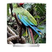 Coy Parrot Shower Curtain