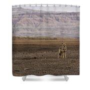 Coyote Badlands National Park Shower Curtain