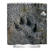 Coyote Shower Curtain by Susan Herber