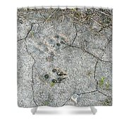 Coyote Tracks Shower Curtain