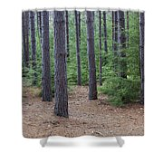 Cozy Conifer Forest Shower Curtain