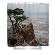 Cpress Shower Curtain