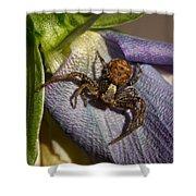 Crab Spider In A Violet Shower Curtain