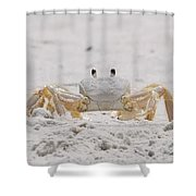 Crabby Eyes Shower Curtain