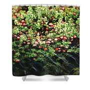 Cranberry Bog Shower Curtain
