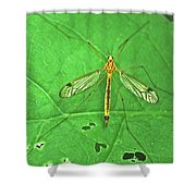 Crane Fly 7623 Shower Curtain