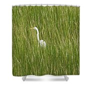 Crane In The Tall Grass On Assateague Island Maryland Shower Curtain