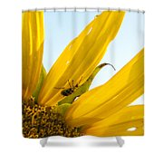 Crawling Along The Sunflower Shower Curtain
