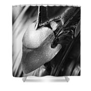 Crazed Warrior 3  Shower Curtain