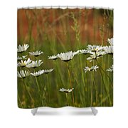 Crazy Lazy Oxeye Daisies Shower Curtain