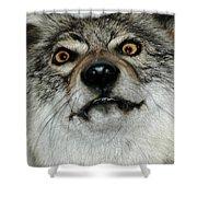 Crazy Like A Fox Shower Curtain