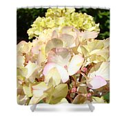 Cream Pink Hydrangea Flowers Art Prints Floral Shower Curtain
