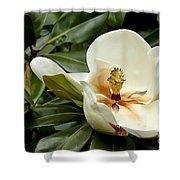 Creamy Magnolia Shower Curtain