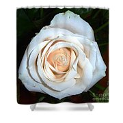 Creamy Rose Iv Shower Curtain