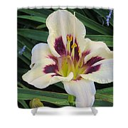 Creamy White Lily Shower Curtain