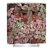 Creative Hues Of Mother Nature Shower Curtain