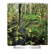 Creek In The Rain Forest Shower Curtain