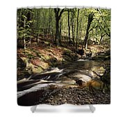 Creek In Woods, Cloughleagh, County Shower Curtain