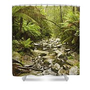 Creek Running Through The Rainforest Shower Curtain