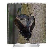Creeping Tawny Owl Shower Curtain