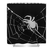 Creepy Spider Shower Curtain