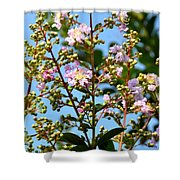 Crepe Mertle In Bloom Shower Curtain