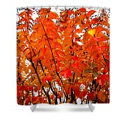 Crepe Myrtle Leaves In Autumn Shower Curtain