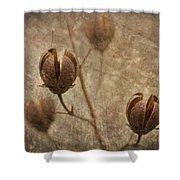 Crepe Myrtle Seed Pods With Grunge And Textures Shower Curtain