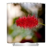 Crimson Bottle Brush Shower Curtain