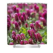 Crimson Clover In All Its Glory Shower Curtain