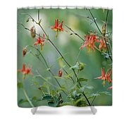 Crimson Columbines Aquilegia Formosa Shower Curtain