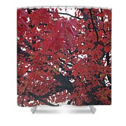Crimson Leaves Shower Curtain