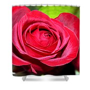 Crimson Red Rose Shower Curtain by Karon Melillo DeVega