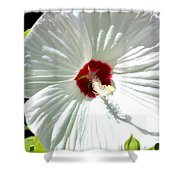 Crimson Stained Shower Curtain