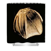Crinoid Fossil Shower Curtain