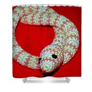 Crochet Snake In Red Shower Curtain